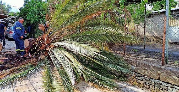 Αγρίνιο: πτώσεις δένδρων και ζημιές σε κηπευτικά-καλλιέργειες από τη χαλαζόπτωση (φωτό)