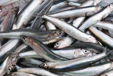 Μελέτη: Μοναδικός ο διατροφικός πλούτος των αλιευμάτων του Αμβρακικού