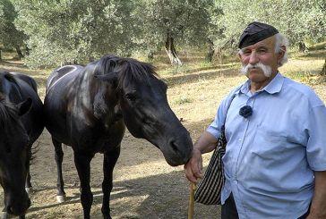 Βίντεο: Ο γνωστός στην Αιτωλοακαρνανία μπάρμπα- Γιάννης Κάτσιος και τα άλογα του