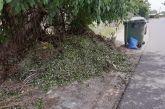 «Επικίνδυνα κομμένα κλαδιά που ξεραίνονται δίπλα στα σκουπίδια στον Ρηγανά»