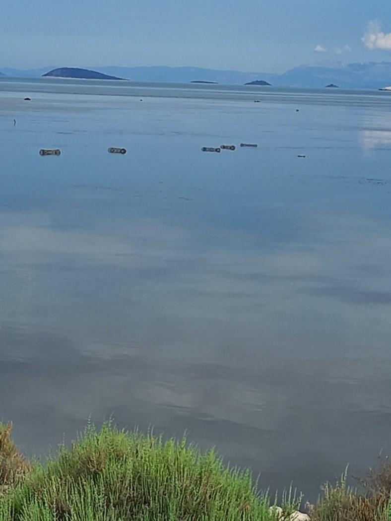 Διόνι: Κατάσχεσε 20 κιλά καβούρια το Λιμενικό