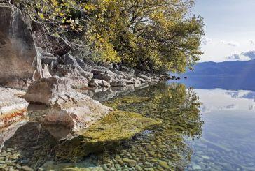 Έντονη η παρουσία της βίδρας στους υγρότοπους της Αιτωλοακαρνανίας