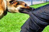 40 δαγκώματα από το ίδιο σκυλί της Τουρλίδας – Αγανακτισμένοι οι παθόντες και όχι μόνο