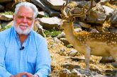 Βίντεο: Ο Γρηγόρης και τα ελάφια του στα Πετροκάλυβα Λεπενούς