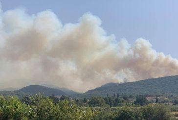 Μεγάλη μάχη με τις φλόγες στην περιοχή του Θυρρείου-προς Δρυμό η φωτιά