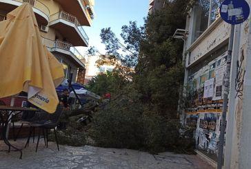 Πτώση δένδρου σε πολυσύχναστο πεζόδρομο του Αγρινίου