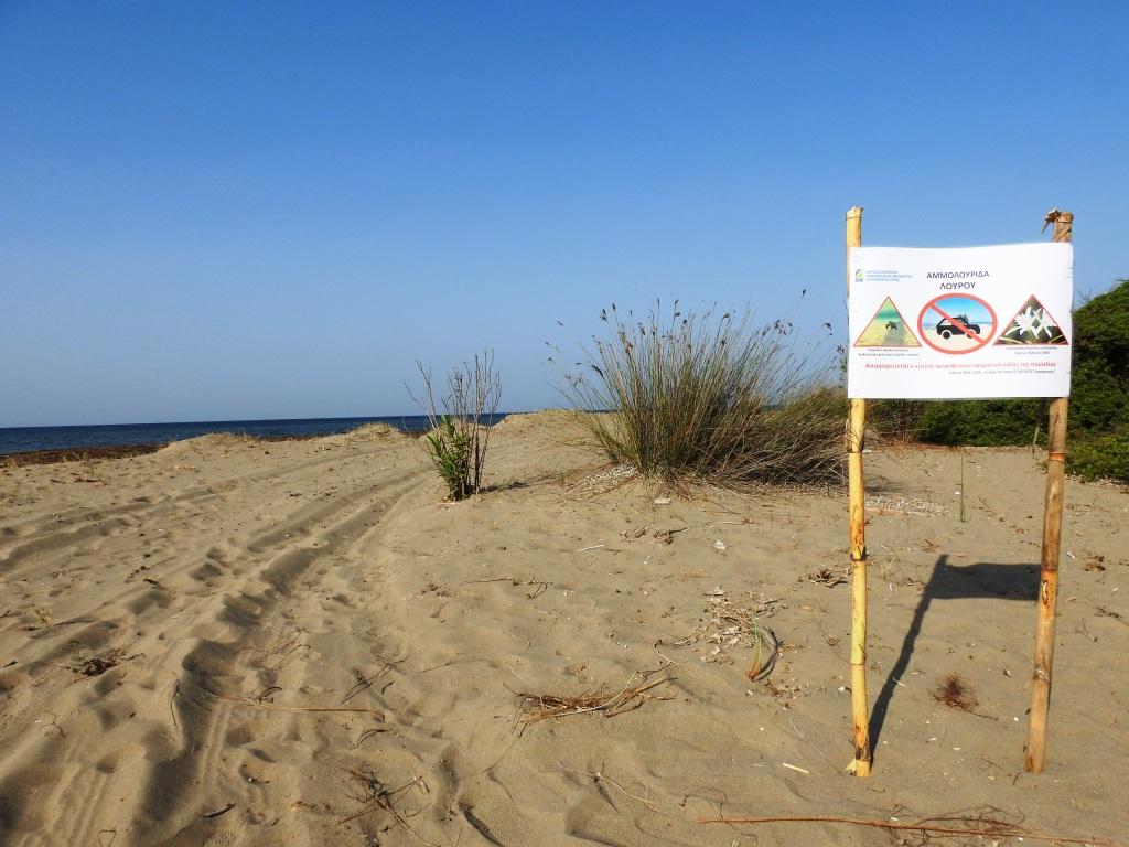Λούρος: Ενημερωτικές σημάνσεις αποφυγής τροχοφόρων από τον Φορέα Διαχείρισης για τα χελωνάκια Caretta caretta