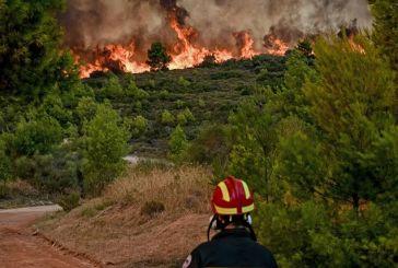 Φωτιές: Υποχρεωτικά αναδασωτέες όλες οι καμένες εκτάσεις -Τι προβλέπει η ΠΝΠ