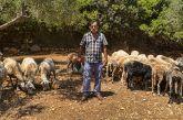 Βίντεο: Στη στάνη του μοναδικού Καλαμισιάνου τσέλιγκα Παντελή