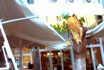 Είχαν… «Άγιο» Πάιατ – Μενέντεζ: Έπεσε δέντρο στο εστιατόριο που δειπνούσαν στο κέντρο της Αθήνας