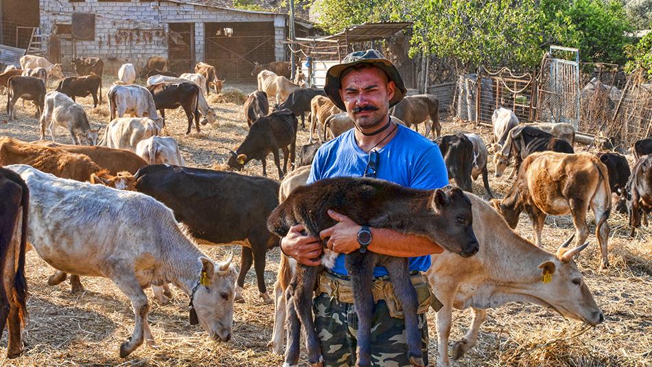 Βίντεο: Η φάρμα με τις αγελάδες του Σταύρου, στον Καραϊσκάκη Ξηρομέρου