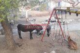 Φωτιά στην Ηλεία: Συγκλονίζει η προσπάθεια των κατοίκων να σώσουν τα ζώα τους