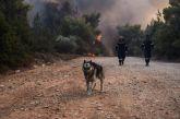 Βαρυπόμπη: Συγκινούν οι προσπάθειες πυροσβεστών και κατοίκων να σώσουν ζωάκια της περιοχής