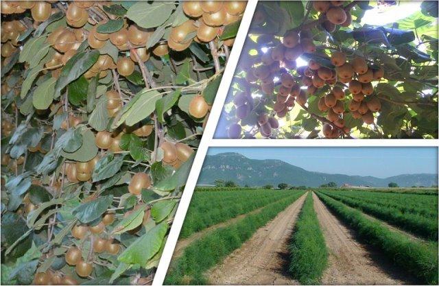 Αγροτικός Συνεταιρισμός Νεάπολης: Πρόσληψη εποχικών εργατών στο συσκευαστήριο ακτινιδίων στη Γουριά