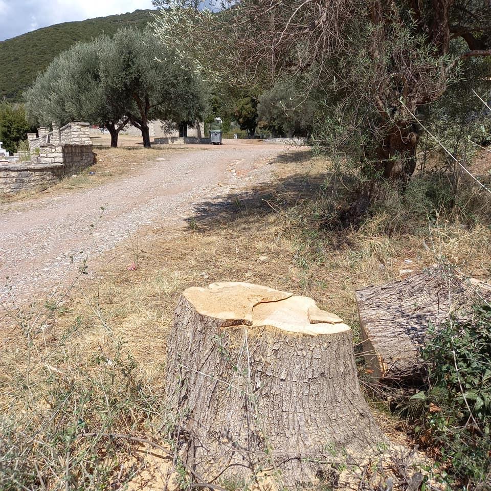 Αντιδράσεις κατοίκων στη Δάφνη Ναυπάκτου για την κοπή δέντρων