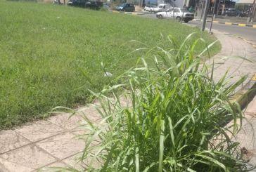 Αγρίνιο: Βλάστησε…. φρεάτιο στον κόμβο Τσίγκα!