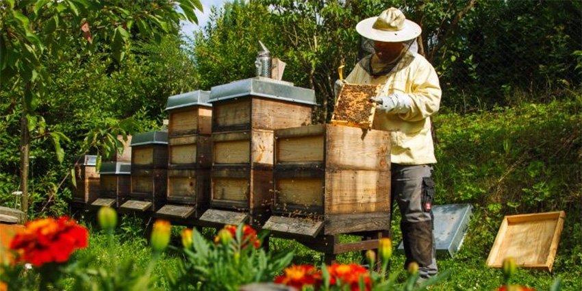 ΥΠΑΑΤ: 19,9 εκατ. ευρώ για ενίσχυση λόγω πανδημίας σε χοίρο, μαύρο χοίρο και μέλι