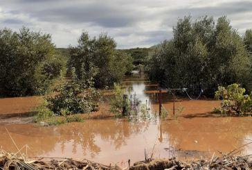 Ούτε από την «Αθηνά» γλίτωσαν οι Οινιάδες-καταστροφές σε καλλιέργειες