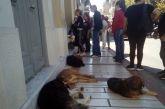 Αγρίνιο: «Μη μου τους… σκύλους τάραττε!»